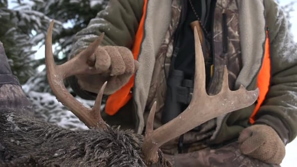 Quebec Outfitters Camp, Season 5, Episode 57, Safari Anticosti